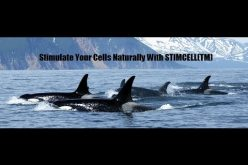 STIMCELL(TM) – Stem Cell Nutrition!