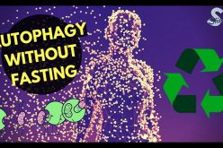 How to Increase Autophagy Without Fasting