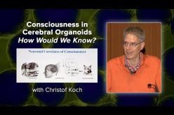Consciousness in Cerebral Organoids – How Would We Know? with Christof Koch